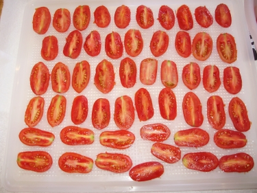 1. 'Rosada' tomatoes -  halved and spaced out on the mesh sheet ready for dehydrating.