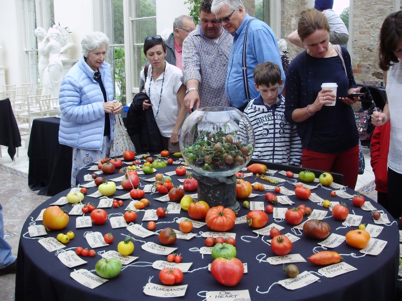 People gazing in wonder at an amazing kaleidoscope of tomatoes on one of the tables at the Totally Terrific Tomato Festival 2016