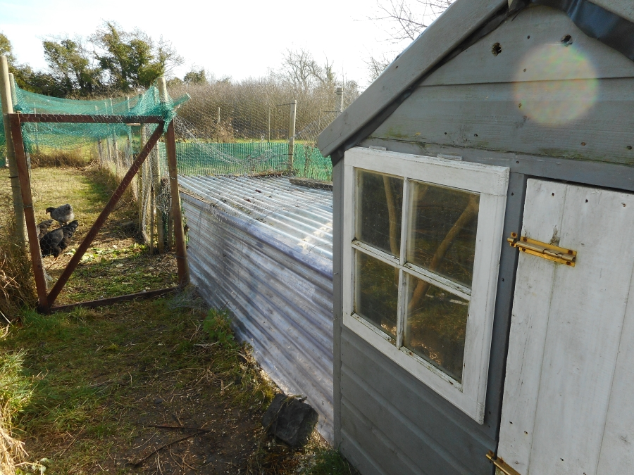 Hen house with scratching pen attached accessed by the pop hole. Sliding side panels allow access to runs on either side.