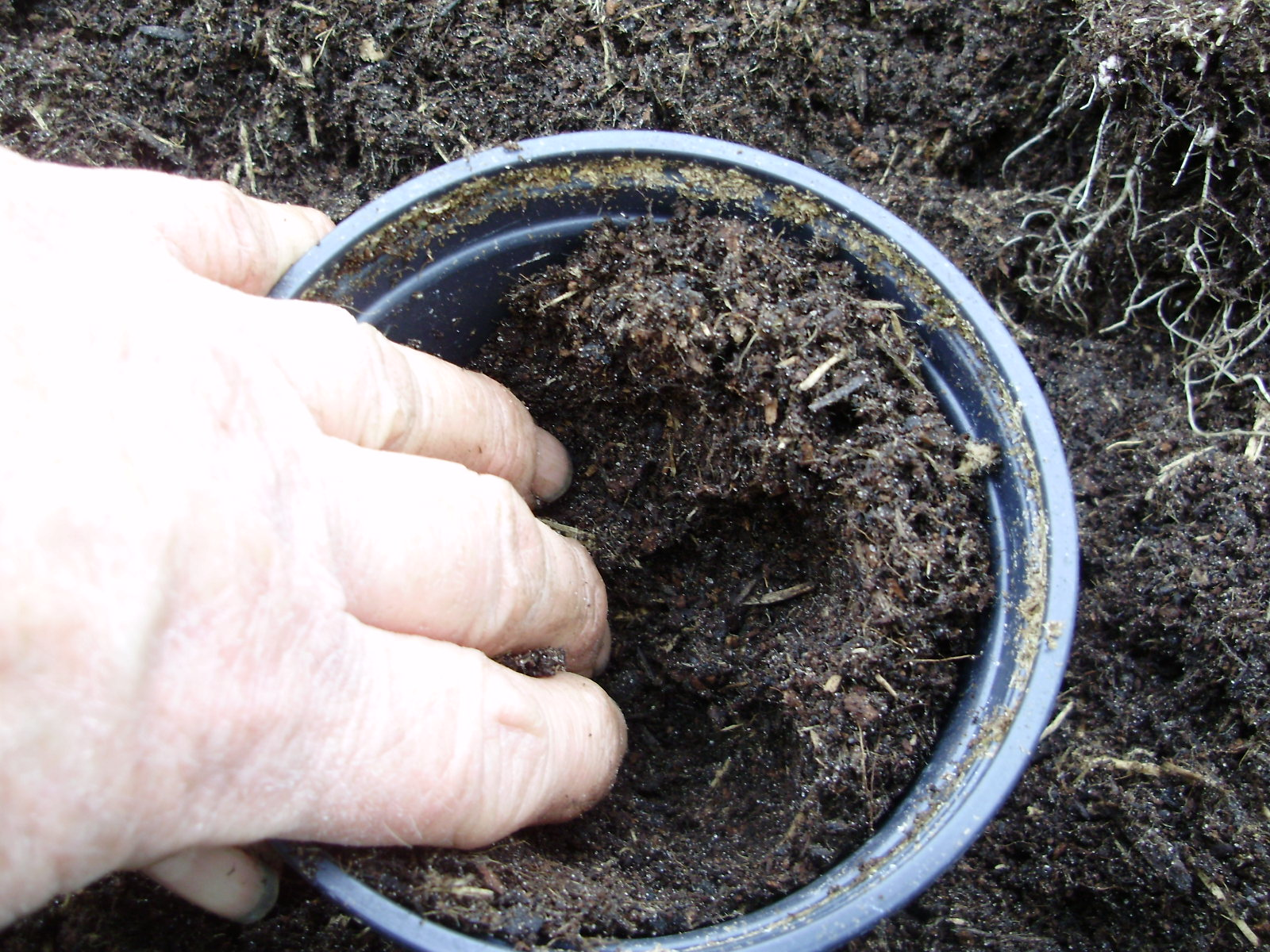 6. Fill a pot with compost & make a wedge shaped hole