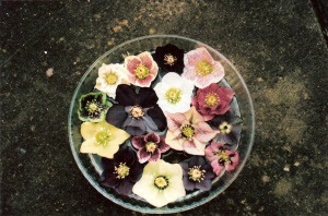Hellebore flowers last well floated in a bowl of water