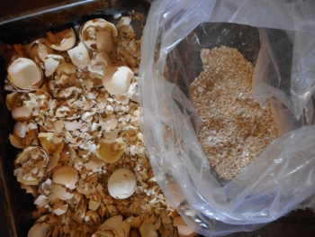 Cooked eggshells being crushed up for worms