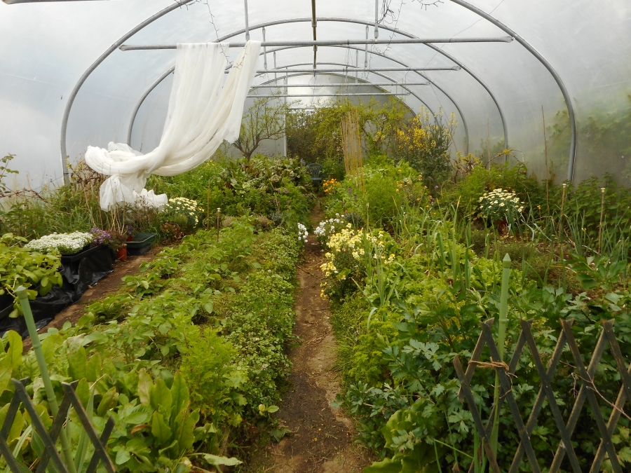 My Polytunnel Potager on May day 2018 - it's always summer in here no matter how grey the day!