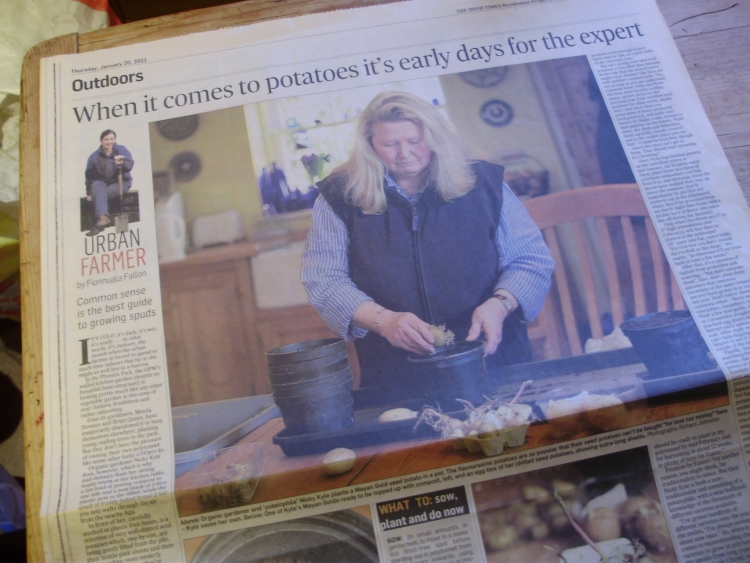 Photo of The Irish Times article on how I grow my extra-early potatoes - by Fionnuala Fallon. 20.1.11