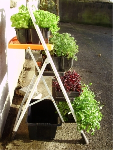 Stepladder garden on path many years ago!